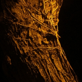 YelloWekerle - Az aranysziget