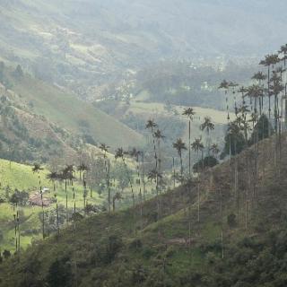 Wekerlei világjárók: Kolumbia